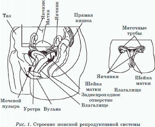 Основы анального секса - vvvgrace.ru